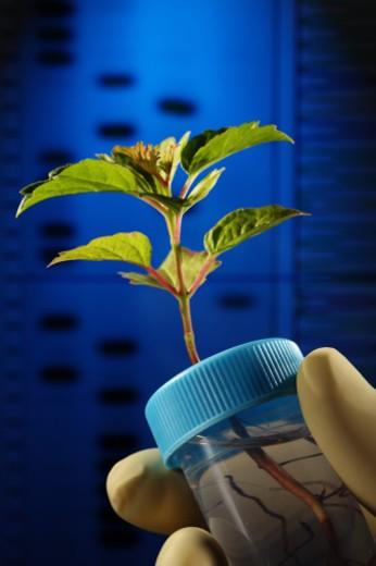 Plant study : Stock Photo