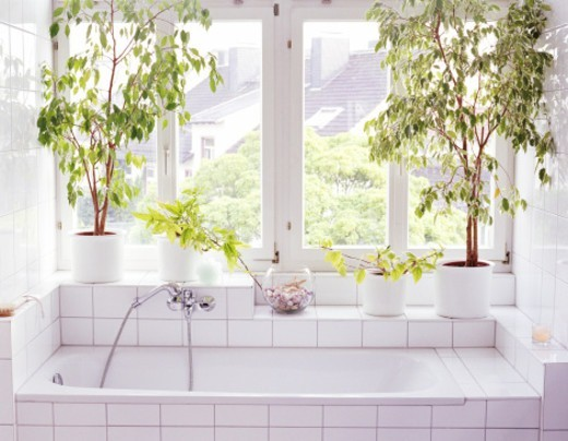 Bathroom interior, plants and windows alongside bathtub : Stock Photo