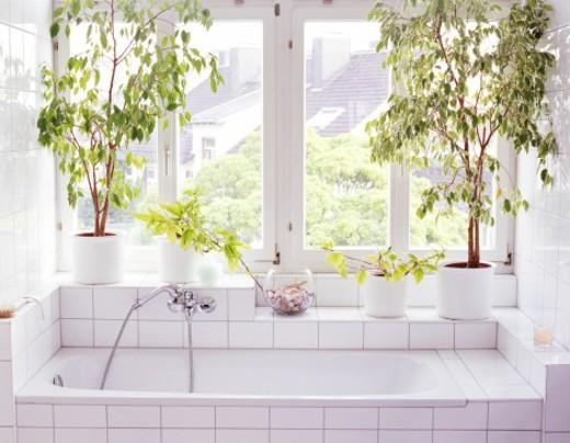 Stock Photo: 1527R-1148858 Bathroom interior, plants and windows alongside bathtub