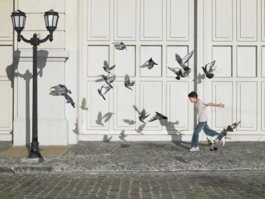Boy (11-13) chasing pigeons in street : Stock Photo