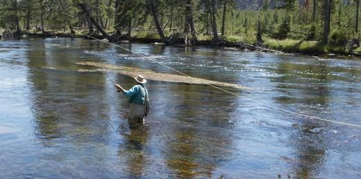 USA, Montana, Yellowstone National Park, Cameron : Stock Photo