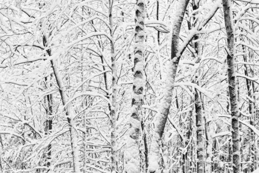 Stock Photo: 1527R-1208668 Trees in winter landscape