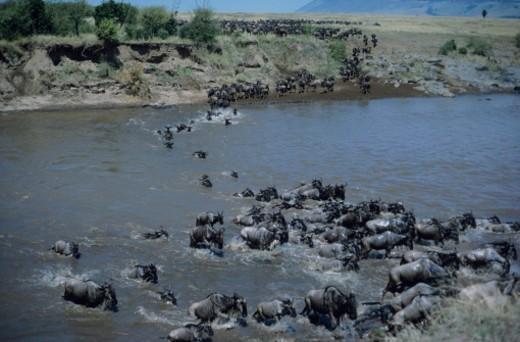 Masai Mara National Reserve, Kenya : Stock Photo