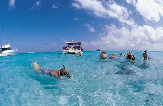 Stock Photo: 1527R-294046 Group of snorkelers looking at stingrays