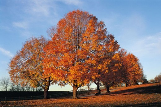 Autumn Trees in Worthington Valley, Maryland, USA : Stock Photo