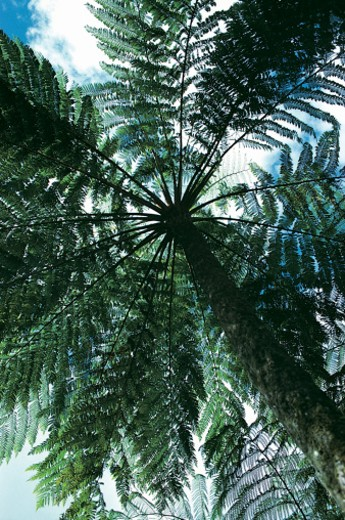 Stock Photo: 1527R-302064 Fern Tree, Queensland, Australia