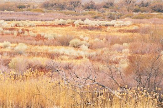 Stock Photo: 1527R-312061 Meadow, Alabama Hills, Eastern Sierra, CA