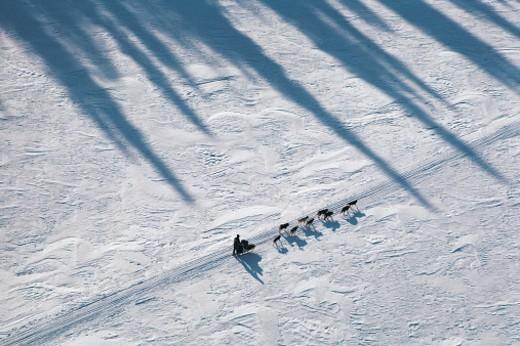 Dog sled in the Iditarod Race, Alaska, USA : Stock Photo