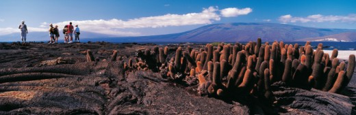 Stock Photo: 1527R-393064 Volcanic scenery, Punta Espinosa, Isla Ferdinandina, Galapagos Islands