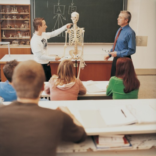 Young University Student Pointing at a Human Skeleton Watched By a Lecturer and Other Students : Stock Photo