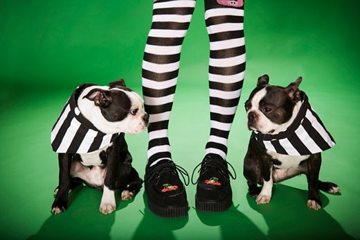 Stock Photo: 1530R-36448 Low section of woman with stripped socks and two dogs