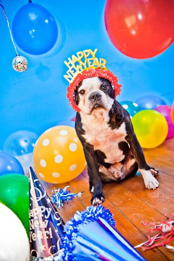 dog in birthday party hat : Stock Photo
