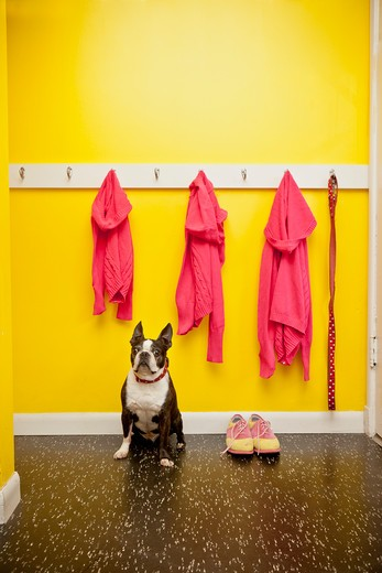 Stock Photo: 1530R-41734 Sweaters and leash on hooks with dog and shoes,