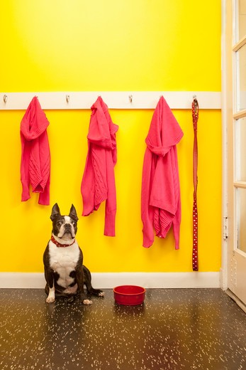 Stock Photo: 1530R-41736 Sweaters and leash with dog and bowl,