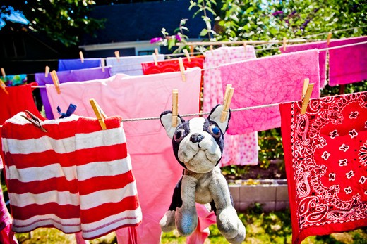 Stock Photo: 1530R-41761 Laundry and stuffed dog hanging on outdoor lines,