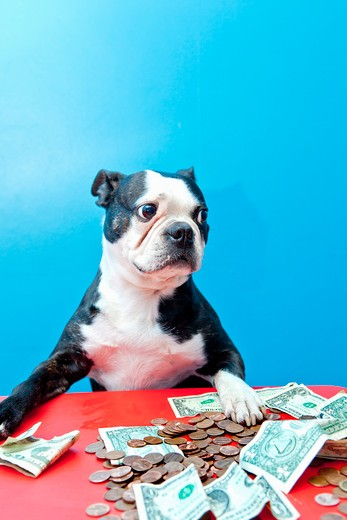Dog with paws on money on red table, : Stock Photo