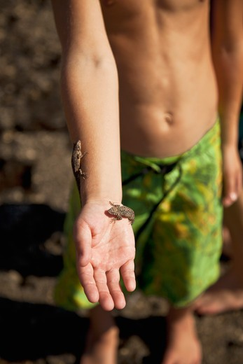 Stock Photo: 1530R-41900 Young boy with geckos on his arm