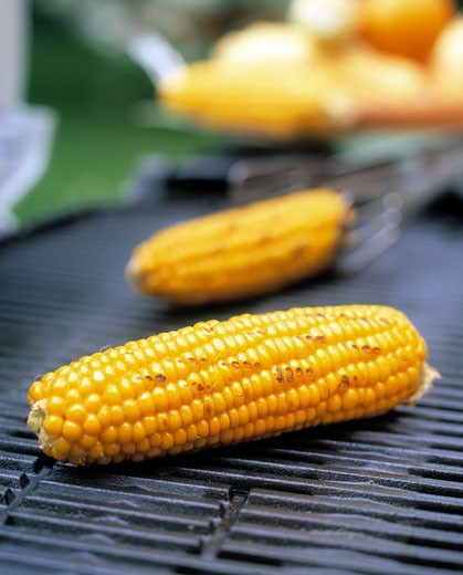 Stock Photo: 1532R-12040 Barbecued corncobs