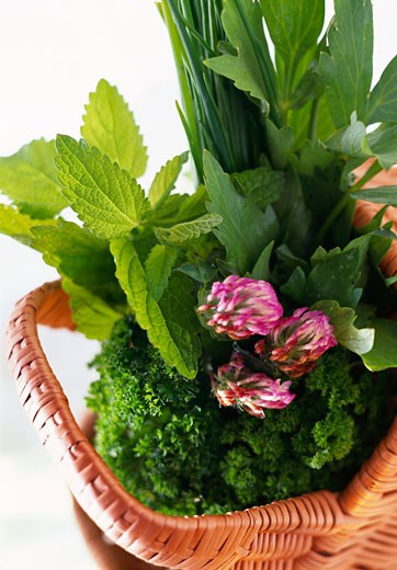 Stock Photo: 1532R-12431 Various fresh herbs in a basket