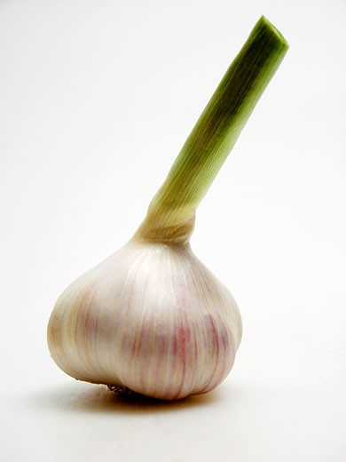 Garlic Bulb : Stock Photo