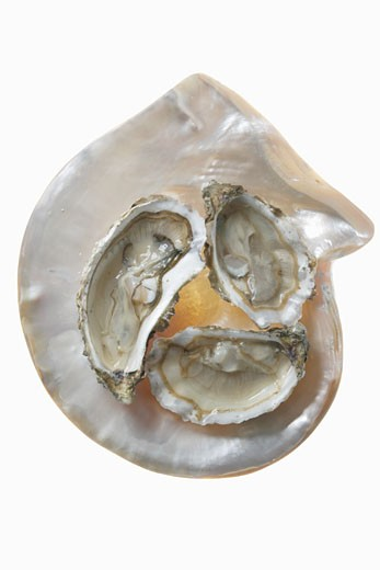 Three oysters on mother-of-pearl background : Stock Photo
