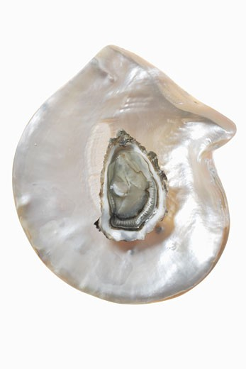 Stock Photo: 1532R-18853 An oyster on mother-of-pearl background
