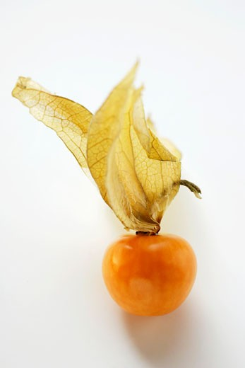 Stock Photo: 1532R-20127 Physalis with calyx