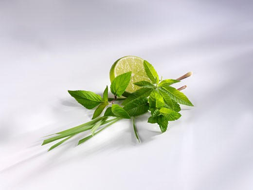 Lemon grass, pineapple sage, mint, lemon verbena & lime : Stock Photo