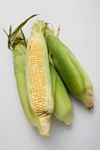 Four corn cobs with husks : Stock Photo