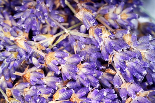 Lavender flowers : Stock Photo