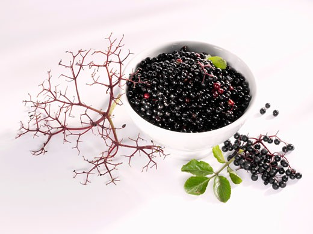 Elderberries stripped off their stalks : Stock Photo