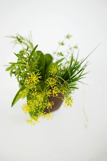 Bunch of herbs with dill flowers in brown beaker : Stock Photo