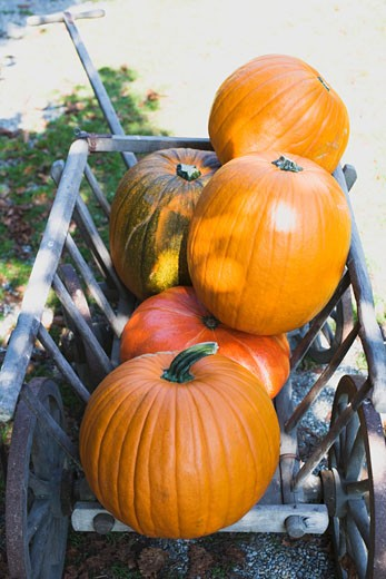 Orange pumpkins in wooden cart (outdoors) : Stock Photo