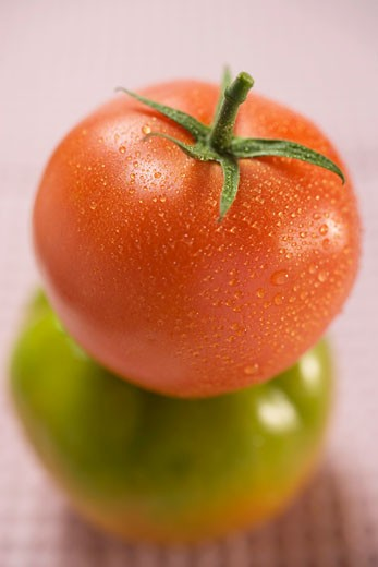 Tomato with drops of water on green tomato : Stock Photo