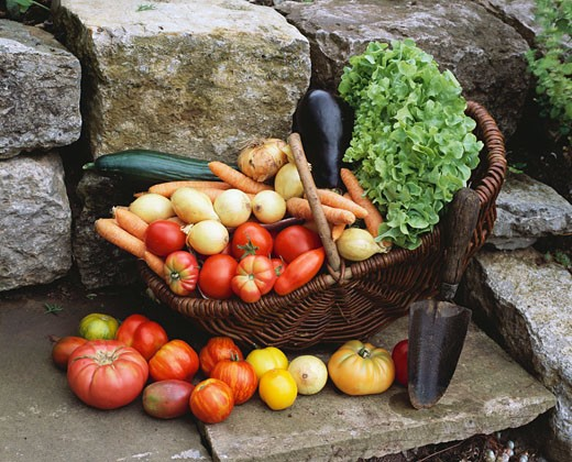 Stock Photo: 1532R-30068 Various types of vegetables in basket with trowel