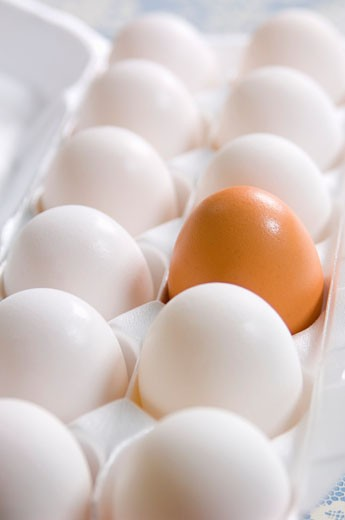 Stock Photo: 1532R-31478 One brown egg and several white eggs in egg box