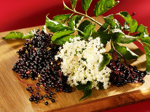 Stock Photo: 1532R-31721 Fresh elderberries and elderflowers on a wooden board