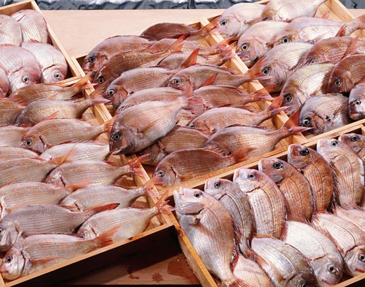 Red sea bream in wooden crates : Stock Photo