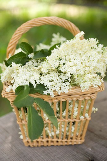 Elderflowers in basket on table : Stock Photo