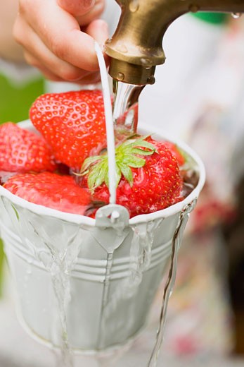 Stock Photo: 1532R-33055 Washing strawberries in a bucket