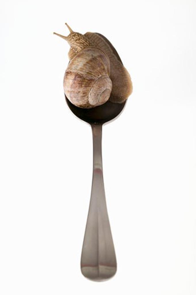 Live snail on spoon : Stock Photo