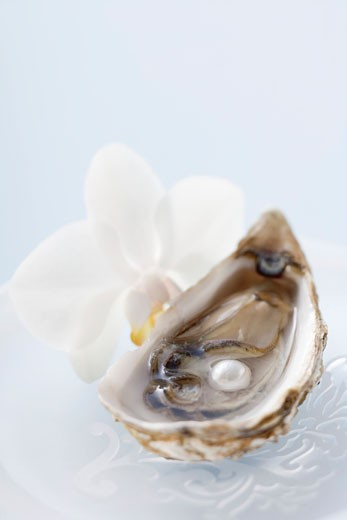 Stock Photo: 1532R-33268 Fresh oyster with pearl, white orchid beside it