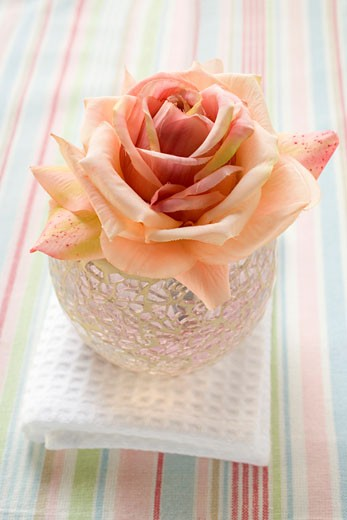 Pink rose in windlight on white towel : Stock Photo