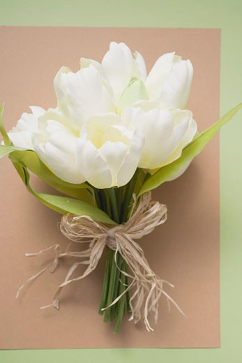 A bunch of white tulips : Stock Photo