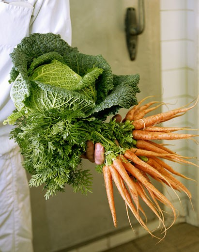 Stock Photo: 1532R-43821 Hand holding fresh carrots and savoy cabbage
