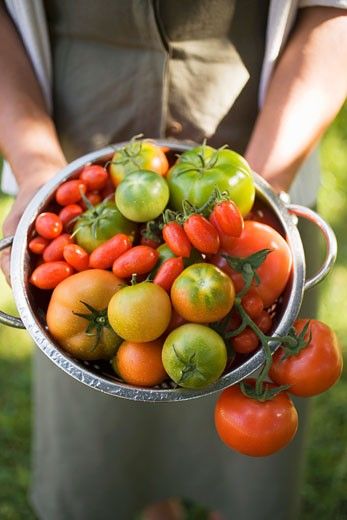 Woman holding colander full of various types of tomatoes : Stock Photo
