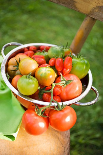Various types of tomatoes in colander on chair out of doors : Stock Photo