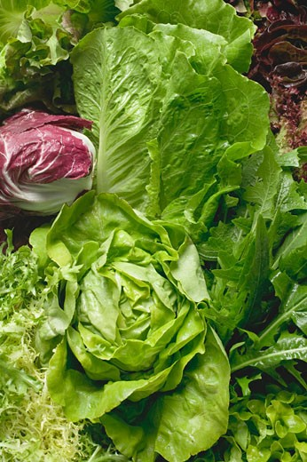 Stock Photo: 1532R-50375 Various lettuces and salad vegetables (full-frame)