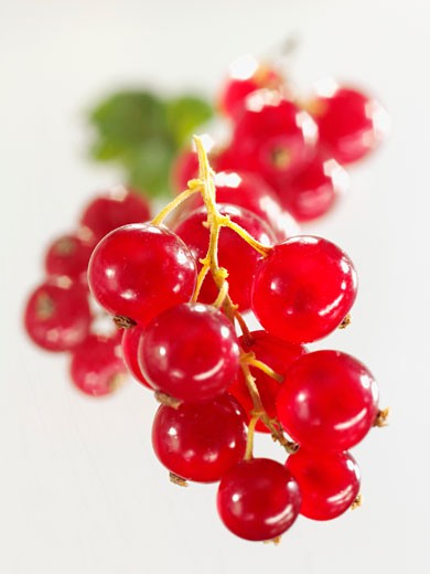 Redcurrants (close-up) : Stock Photo