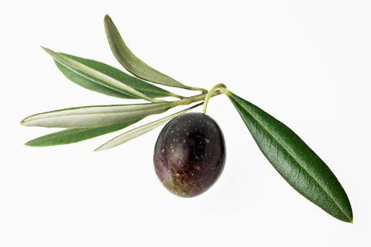 Olive with leaves : Stock Photo